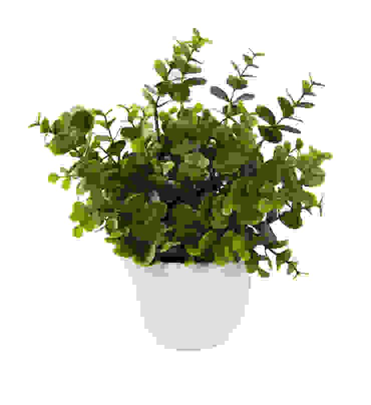 Растения в горшке V921 от LeHome Interiors Классический