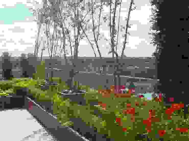 Chelsea Creek - copyright St George Plc Modern garden by Aralia Modern Stone