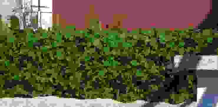 Cobertura ajardinada em Cortegaça Jardins modernos por Neoturf Moderno