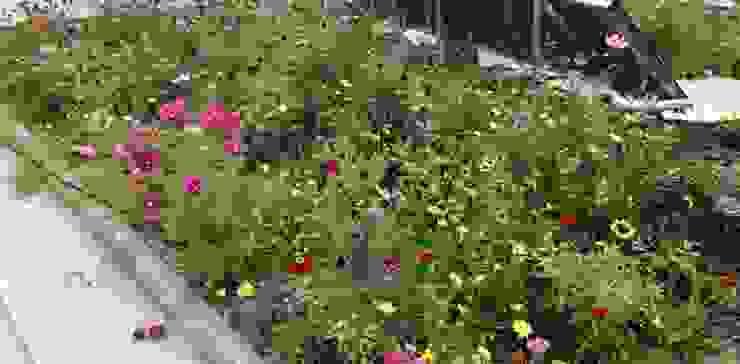 Cobertura ajardinada com prado florido Jardins modernos por Neoturf Moderno