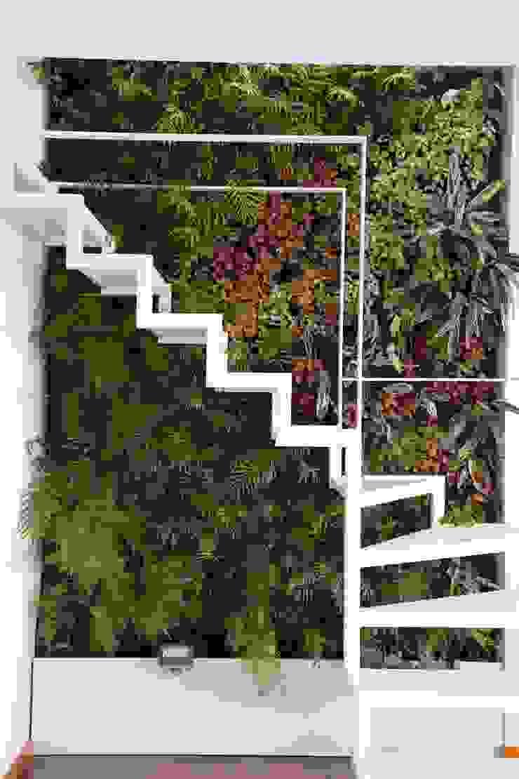 Vườn phong cách hiện đại bởi LC Vertical Gardens Hiện đại