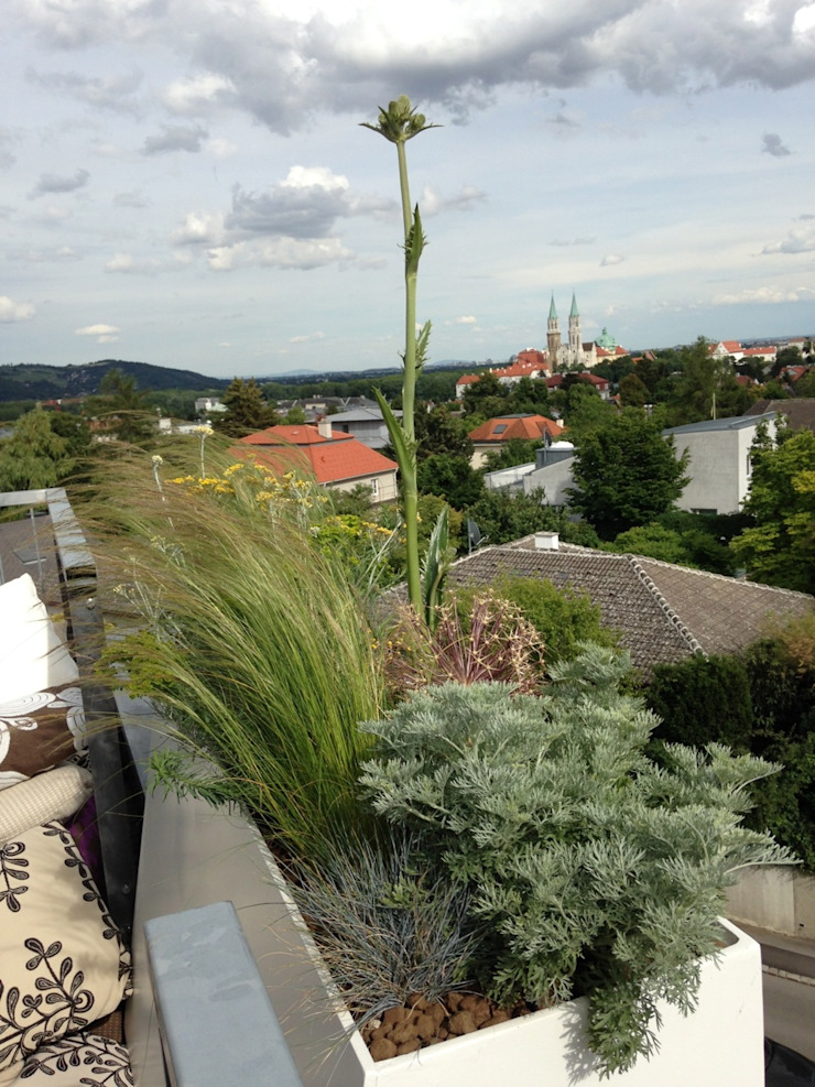 Modern style balcony, porch & terrace by neubert und fuchs_gartenabteilung Modern