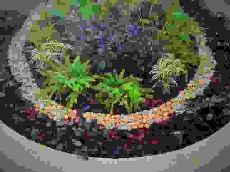 Garden by EcoEntorno Paisajismo Urbano, Modern