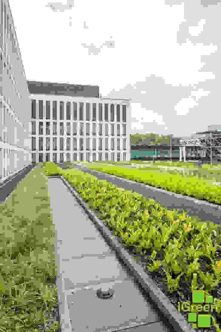Dach zielony Hilton Garden Inn od IGREEN Architektura Krajobrazu i Miejskie Formy