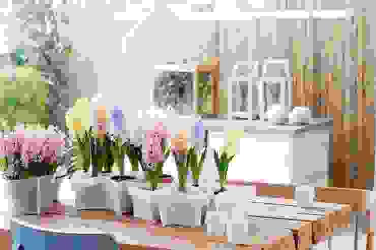 modern  by Pflanzenfreude.de, Modern