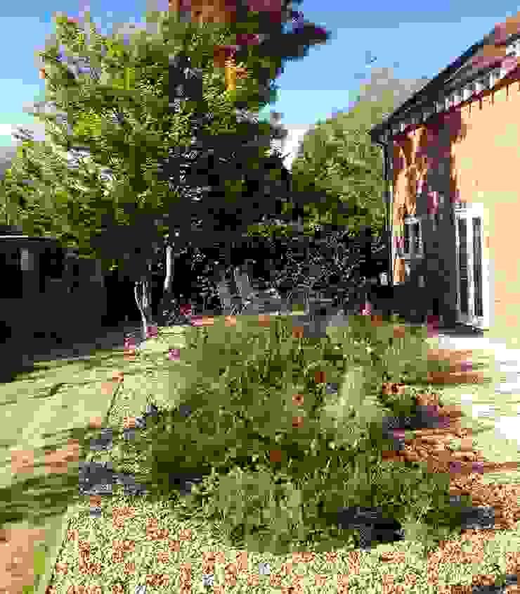 Evening Garden Cornus Garden Design Modern Garden