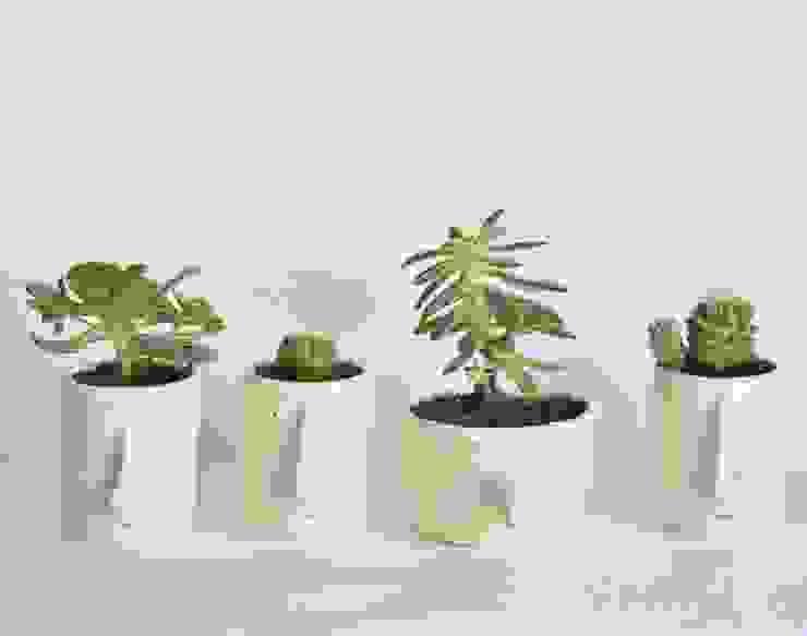 Pompilio Plants의 현대 , 모던