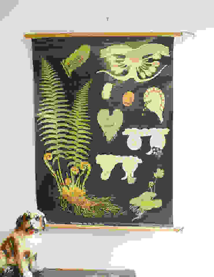 De Varen: Retro schoolkaart. Originele vintage schoolplaat/plantenkunde. van Flat sheep Rustiek & Brocante