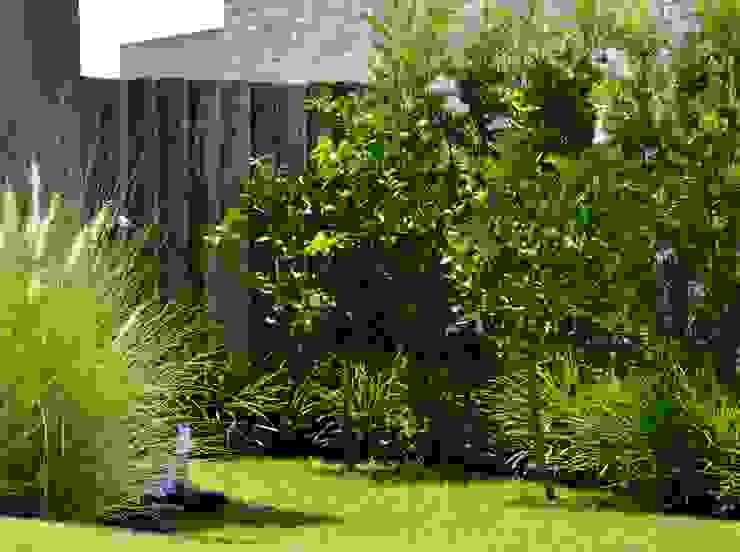 Clarisco Jardins modernos por creare paisagismo Moderno