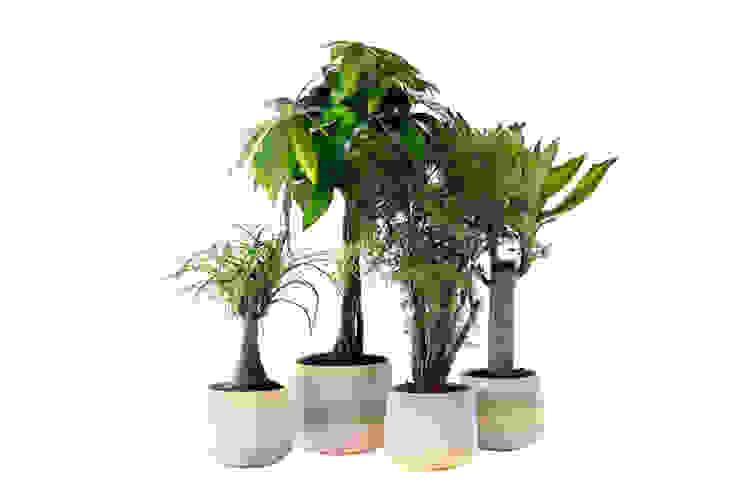 de Pflanzenfreude.de Moderno