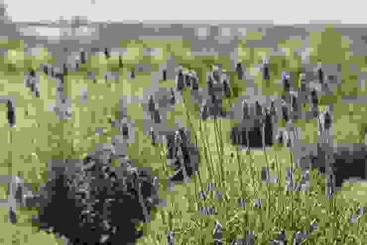 Quinta privada Jardines rústicos de LAS MARIAS casa & jardin Rústico