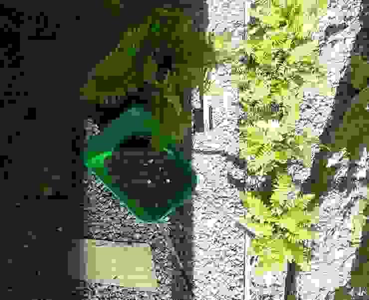 Plantación de los helechos Jardines minimalistas de SOiL arquitectura del paisaje Minimalista Arenisca