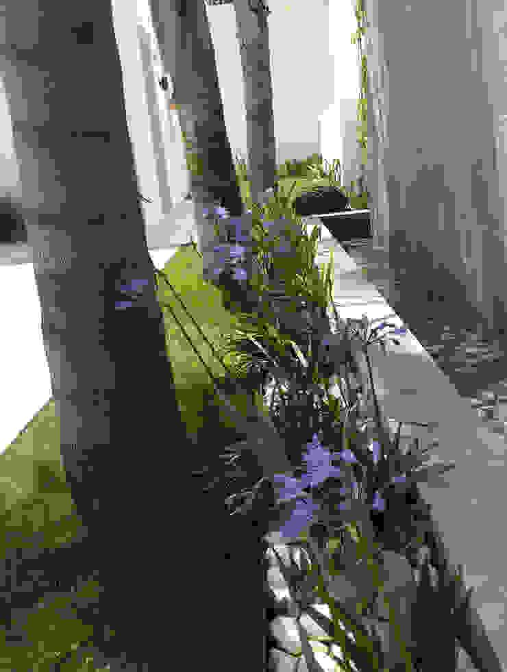 Modern garden by Beatrice Perlac - Adarve Jardines Modern