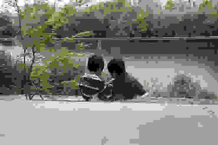 池を望む家-水面を愛でる暮らし- モダンな庭 の atelier m モダン