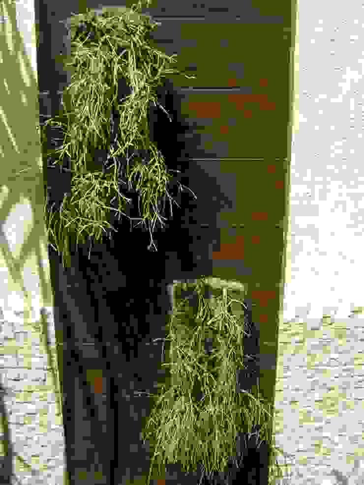 Minimalist style garden by MC3 Arquitetura . Paisagismo . Interiores Minimalist
