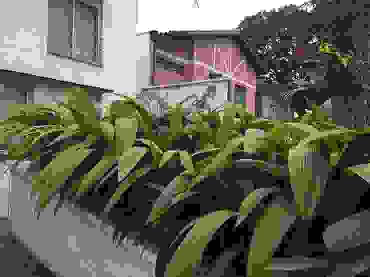 Сад в тропическом стиле от homify Тропический