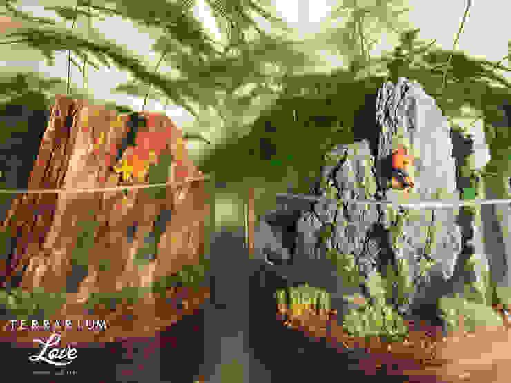 Terrarium love – Climber Terrarium: modern tarz , Modern