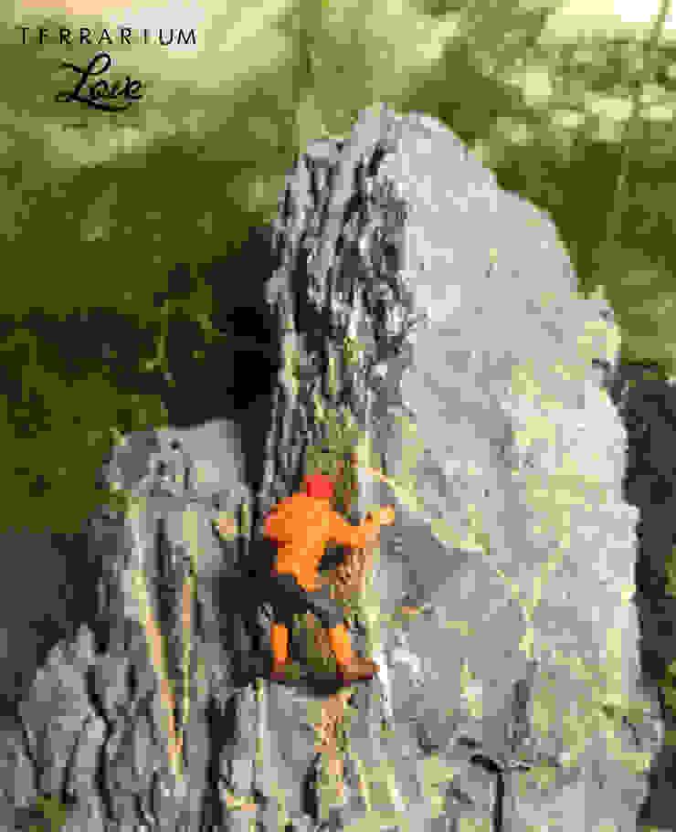 Terrarium love – Climber Terrarium : modern tarz , Modern