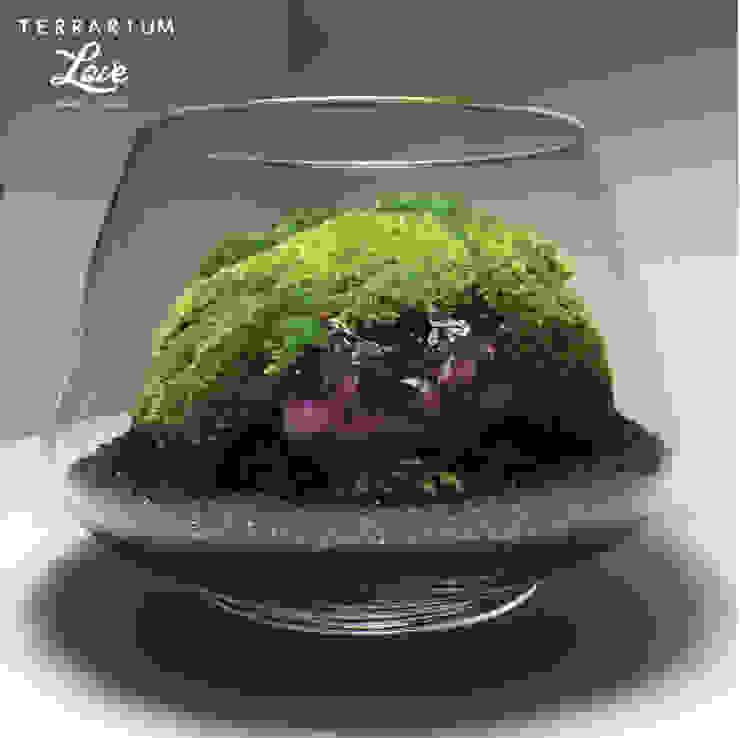 de Terrarium love Moderno