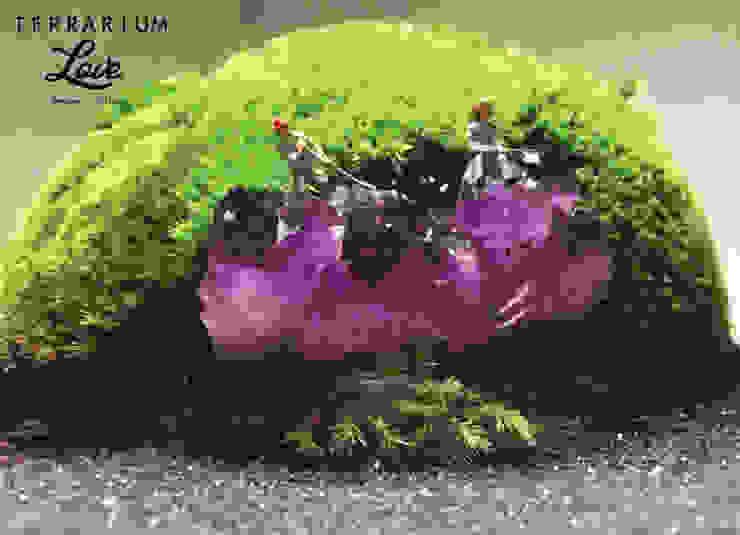 Terrarium love – Amethyst Terrarium: modern tarz , Modern