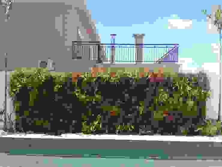 Tropical style garden by Eneida Lima Paisagismo Tropical