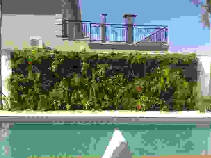 Depois de 3 meses da reforma Jardins tropicais por Eneida Lima Paisagismo Tropical