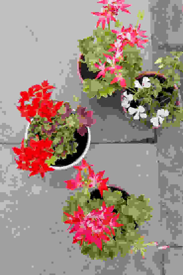 Klassieke balkons, veranda's en terrassen van Pflanzenfreude.de Klassiek