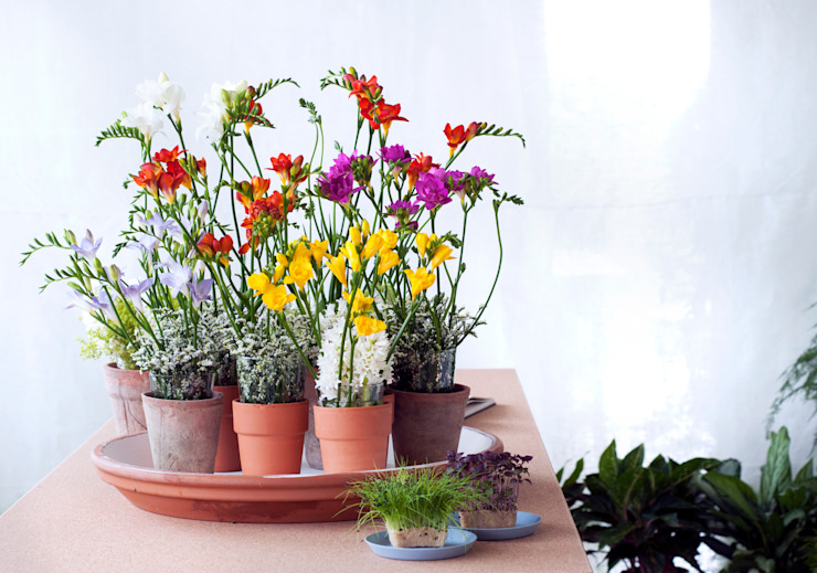 Freesien Moderne Wohnzimmer von Tollwasblumenmachen.de Modern