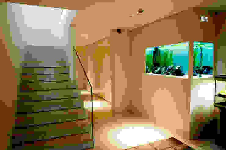 ADn Aquarium Designが手掛けた現代の, モダン