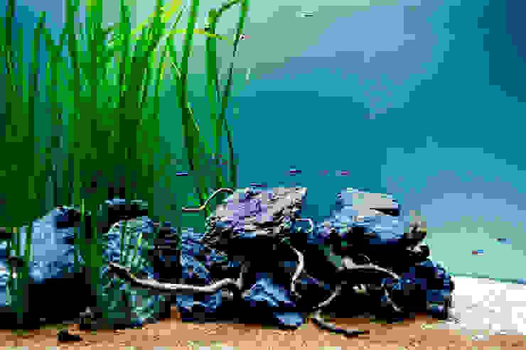 Adn freshwater aquarium - interior detail:  tropical por ADn Aquarium Design,Tropical