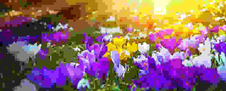 Krokusse in der Sonne GARDOMAT - Die Gartenideenmacher Klassischer Garten