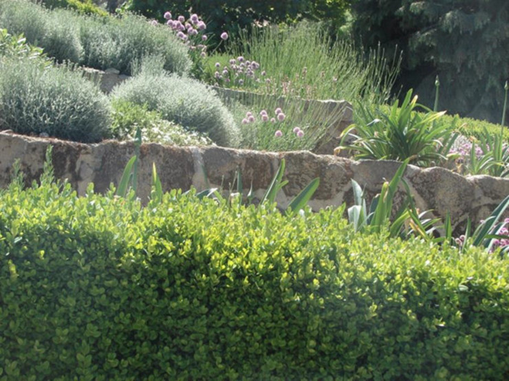 Jardim de aromáticas Jardins mediterrânicos por andré nascimento-arquitetura paisagista Mediterrânico