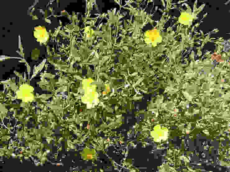 Jardins mediterrânicos por homify Mediterrânico