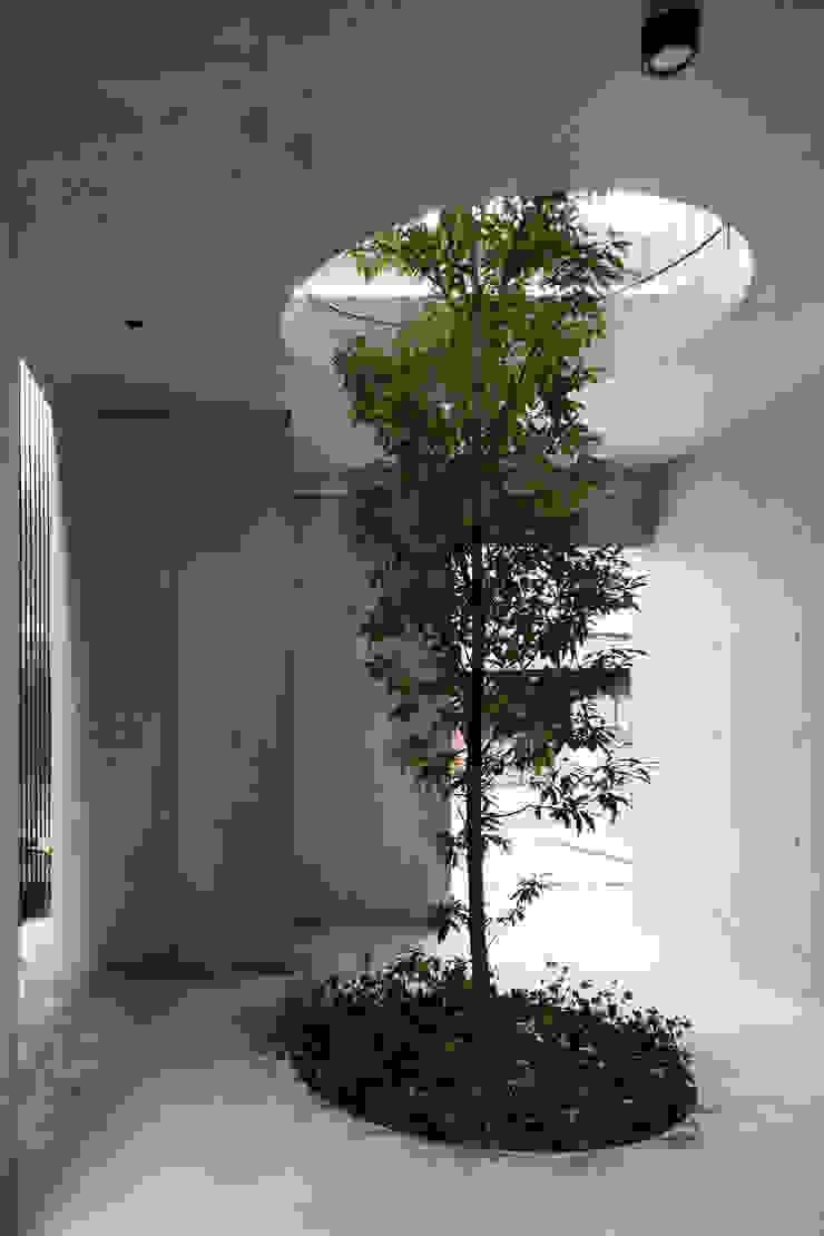 Casa Verde 御所西 株式会社 藤本高志建築設計事務所 モダンな庭 コンクリート 緑