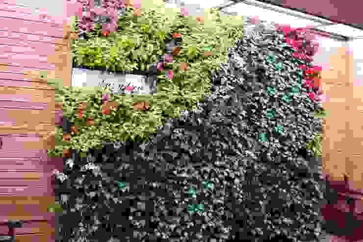 Jardín vertical Hermanos Capuchinos Bogotá D.C Jardines de estilo rústico de Verde & Verde Ingenieros & Arquitectos SAS Rústico