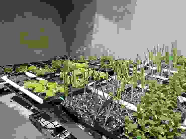 Techos Verdes: Jardines de estilo  por Techos Verdes Productivos,