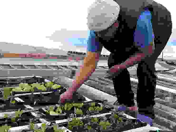 Techos Verdes Jardines de estilo clásico de Techos Verdes Productivos Clásico