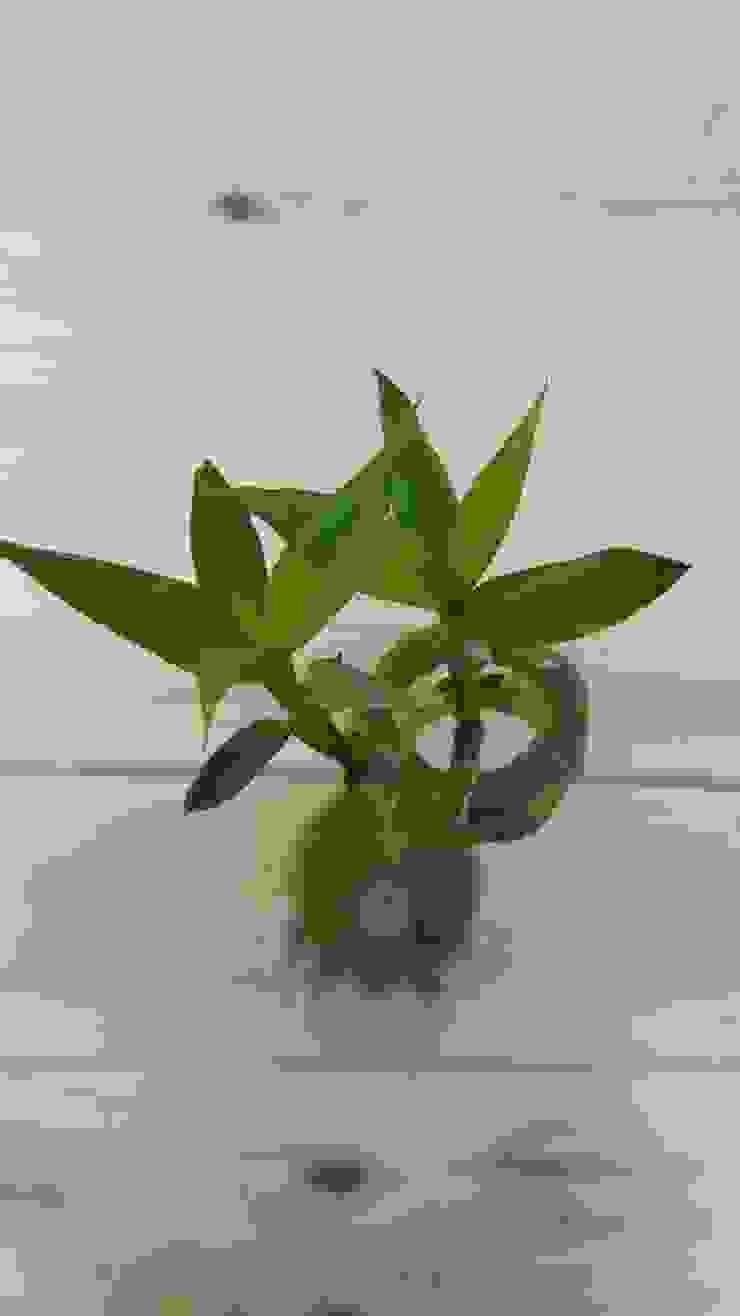 Kokedama Lucky Bamboo de ZoeDecco Minimalista