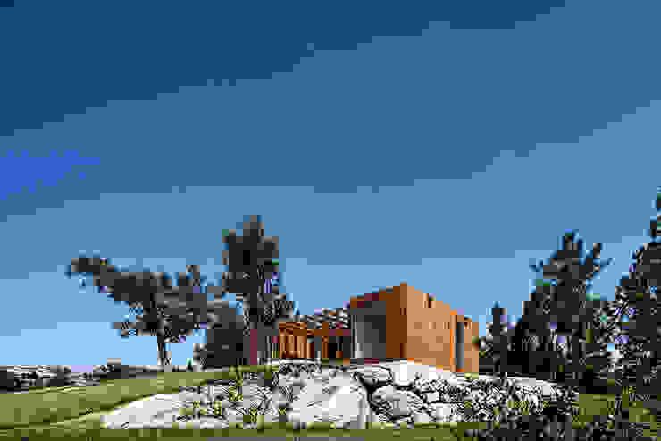 Modern Houses by Jular Madeiras Modern Wood Wood effect