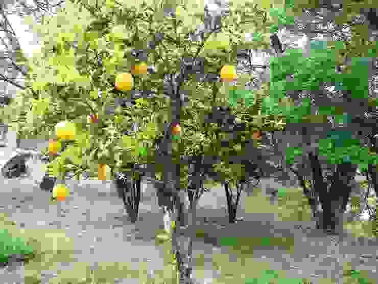 árboles frutales Liliana almada Propiedades Jardines de estilo colonial