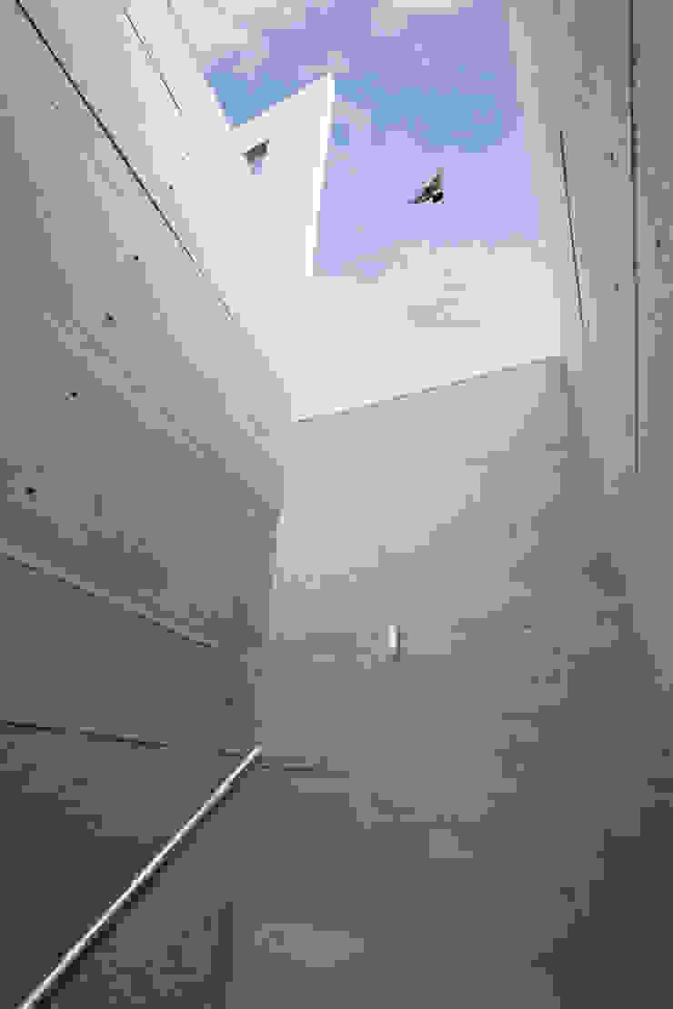 Butterfly House Modern corridor, hallway & stairs by ESSTEAM Modern