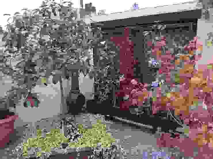 Cottage Garden Transformation Mediterranean style garden by Elephant Interior Exterior Design Mediterranean