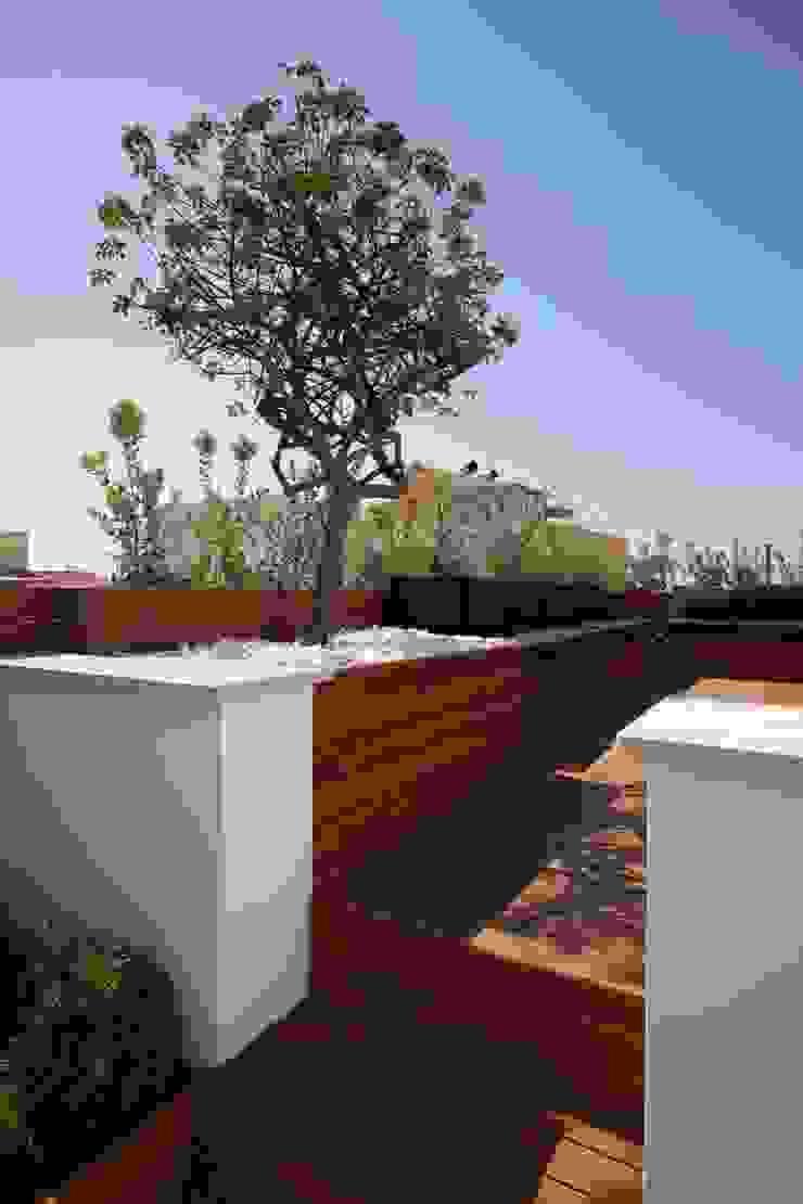 studioSAL_14 Балкони, веранди & тераси Рослини та квіти Дерево
