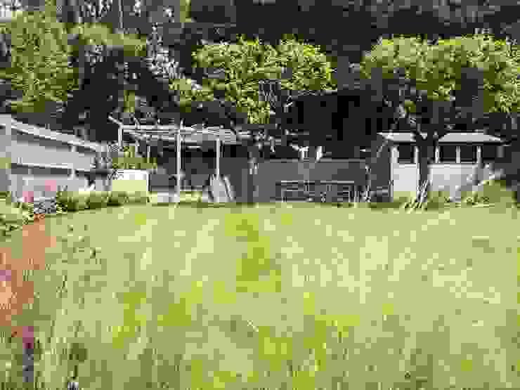Planting Borrowed Space Modern garden
