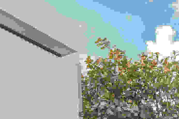 Bosques de Bugambilias Casas minimalistas de 2M Arquitectura Minimalista