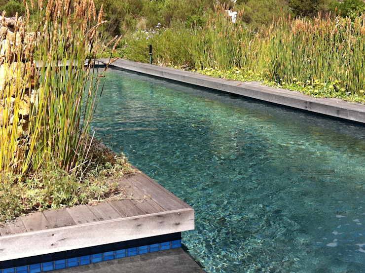 Lap Pool set in fynbos Red Daffodil Country style pool