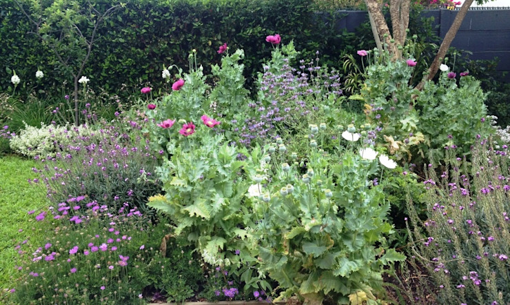 Wild Salvia & Poppy Mix Red Daffodil Colonial style garden