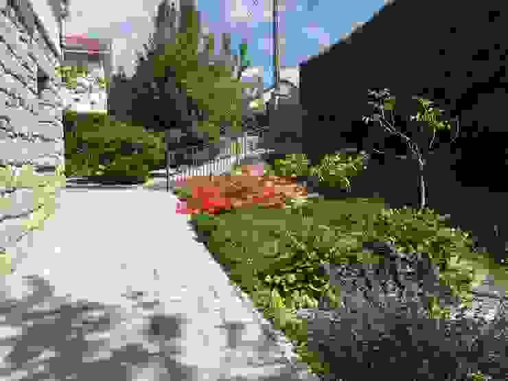 Contemporary Garden Mediterranean style garden by Azarbe jardines Mediterranean