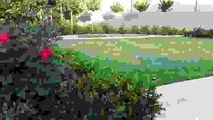 Jardin moderne par Gorgeous Gardens Moderne