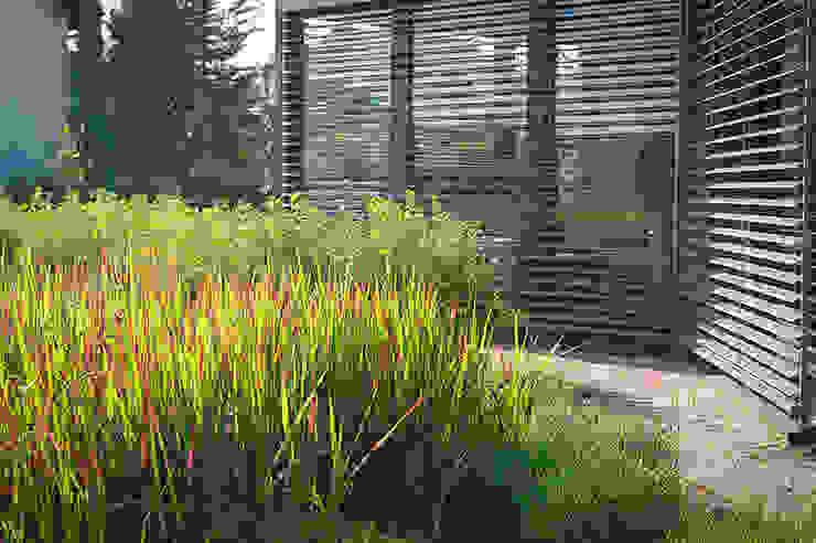 Jardines de invierno modernos de Pracownia Projektowa Architektury Krajobrazu Januszówka Moderno